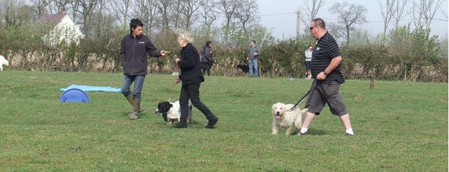 Pension du Val de Cassel - Pension et dressage pour chiens